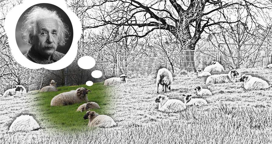 ovejas en prado